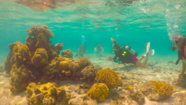 people scuba diving underwater in rarotonga lagoon cook island - rarotonga stock videos & royalty-free footage