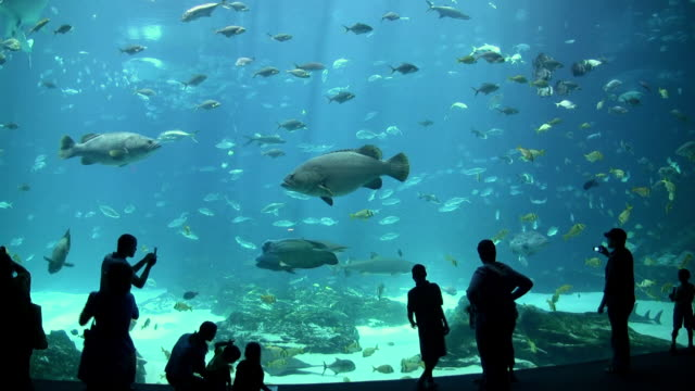 ms people silhouette large aquarium full of fish  / atlanta, georgia, united states - 水族館点の映像素材/bロール