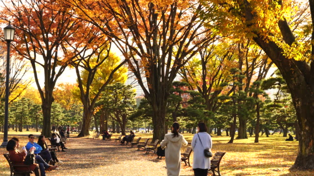 people sit on the benches and walk through the footpath, which is surrounded by rows of autumn leaves trees at kokyogaien national park at kokyogaien, chiyoda tokyo japan on november 25 2017. - autumn leaf color stock videos and b-roll footage