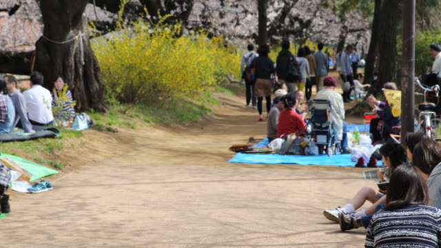 "people sitting on mats and having picnic on a flowered path in the famous cherry bloom viewing spot ""chidorigafuchi"", located in between the imperial... - cherry blossom stock videos & royalty-free footage"