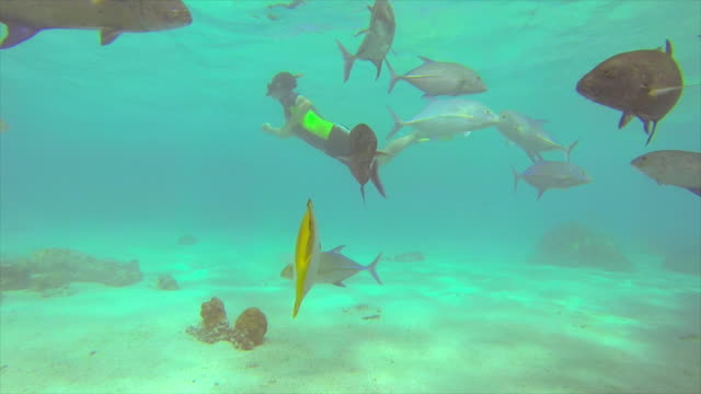 people snorkeling near a glass-bottom boat over a coral reef of a tropical island. - sporttauchen stock-videos und b-roll-filmmaterial
