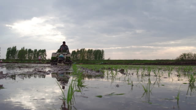 vídeos de stock, filmes e b-roll de people sows on may 15 2017 in wuchang heilongjiang province china wuchang is a major rice growing area in northern china - só um homem idoso