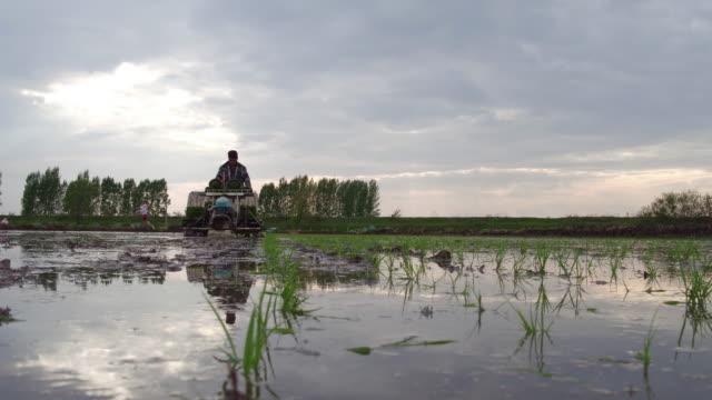 vídeos y material grabado en eventos de stock de people sows on may 15 2017 in wuchang heilongjiang province china wuchang is a major rice growing area in northern china - un solo hombre mayor