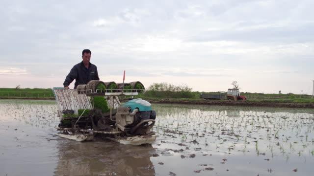 people sows on may 15 2017 in wuchang heilongjiang province china wuchang is a major rice growing area in northern china - endast en pensionärsman bildbanksvideor och videomaterial från bakom kulisserna