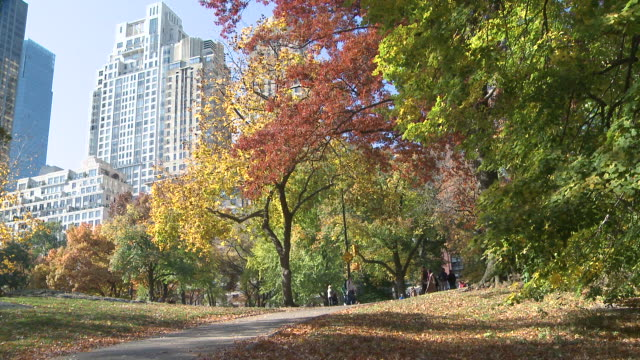 vidéos et rushes de ms people strolling in autumn in central park / new york, new york, united states - central park