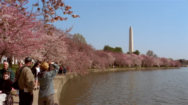 people strolling under cherry blossoms along tidal basin and photographing washington monument / washington, dc - washington monument washington dc stock videos & royalty-free footage