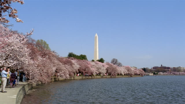 people strolling under cherry blossoms on bank of tidal basin with view of washington monument in background / washington, dc - washington monument washington dc stock videos & royalty-free footage