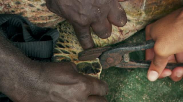 vídeos de stock e filmes b-roll de people tag endangered sea turtle for conservation research, solomon islands - animal em via de extinção