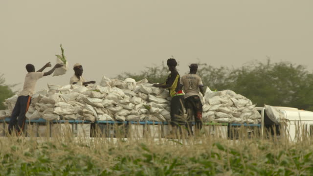 stockvideo's en b-roll-footage met slomo people throw sweetcorn onto lorry, senegal - cereal plant