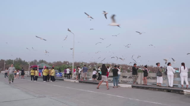 People traveling to see migratory gulls
