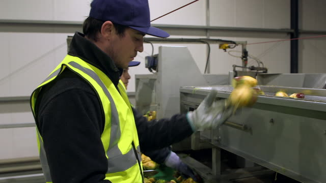 people trim swede at a processing plant - unloading stock videos & royalty-free footage