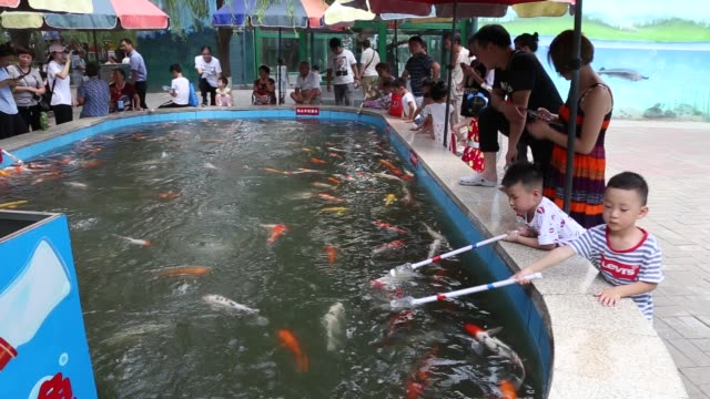 people use feeding bottles to feed koi fish at zhengzhou zoo on july 17 2018 in zhengzhou henan province of china breeders mix feed with water in... - 河南省点の映像素材/bロール
