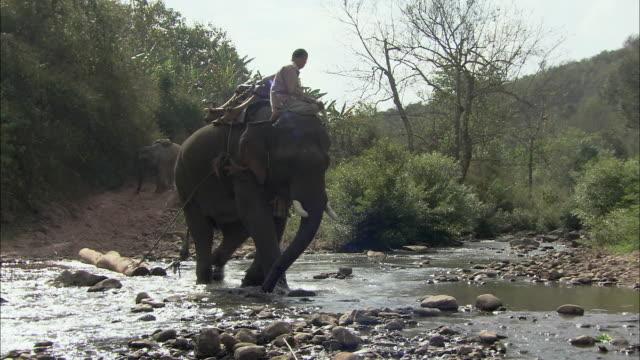 ws people using elephants to haul logs across river, thailand - 引く点の映像素材/bロール