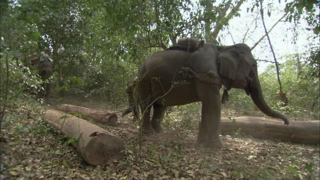 ws people using elephants to haul logs, thailand - 引く点の映像素材/bロール