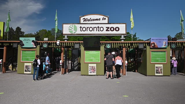 vidéos et rushes de people visiting toronto zoo as ontario reopens, in toronto, ontario, canada on saturday, june 19, 2021. ontario is now allowing limited outdoor... - non urban scene