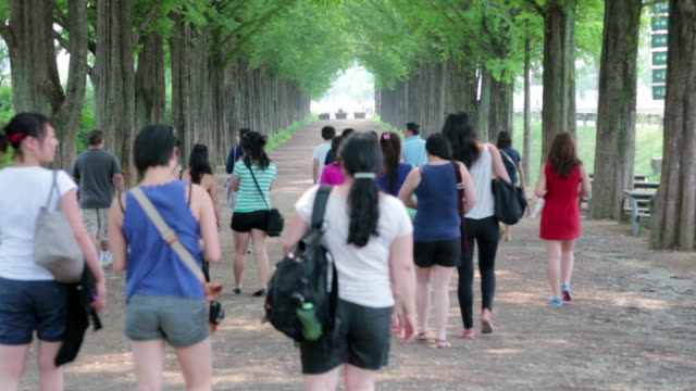 people waling in metasequoia-lined street - damyang stock videos & royalty-free footage