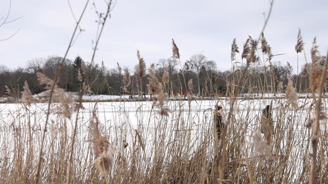 people walk and ice skate on frozen heilige see lake during the second wave of the coronavirus pandemic on february 13, 2021 in potsdam, germany. a... - reed grass family stock videos & royalty-free footage