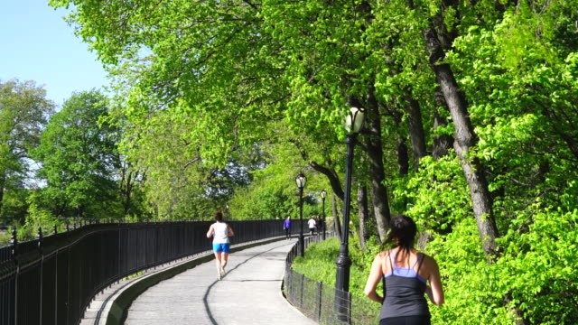 people walk and run on the stephanie and fred shuman running track around the reservoir, which is surrounded by rows of spring fresh green trees in central park new york. spring wind shakes fresh green trees. - central park manhattan stock videos & royalty-free footage