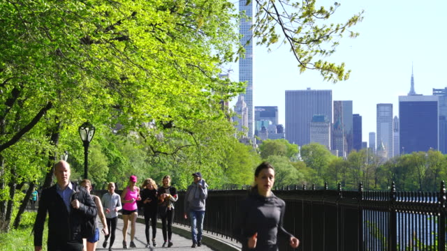 people walk and run on the stephanie and fred shuman running track around the reservoir, which is surrounded by rows of spring fresh green trees in central park new york. spring wind shakes fresh green trees. - central park reservoir stock videos and b-roll footage