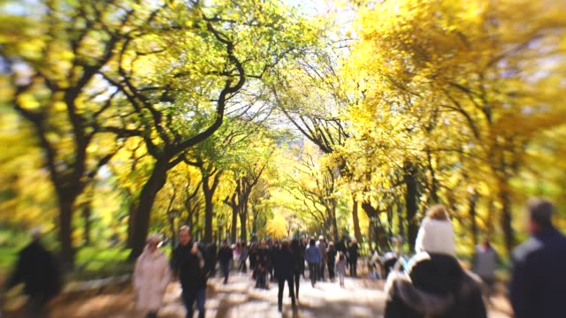 people walk down the mall, which are surrounded by rows of autumn color trees and illuminated by autumn sunlight in central park new york ny usa on nov. 04 2018. - branch plant part stock videos and b-roll footage