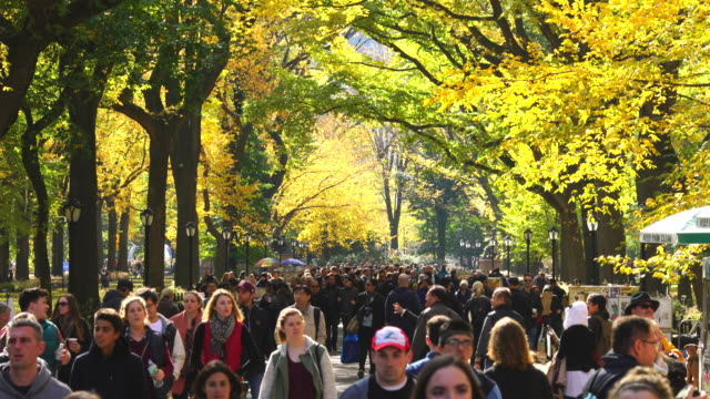 People walk down The Mall, which is surrounded by rows of autumnal color trees.