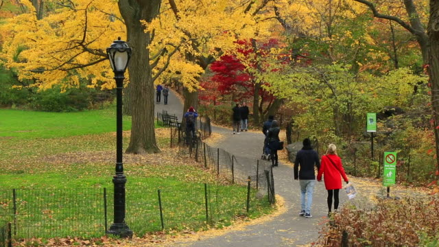 People walk down the path which is surrounded by autumn fallen leaves and trees.