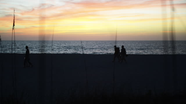 people walk on beach during sunset, bent grass in foreground - anna maria island stock videos and b-roll footage