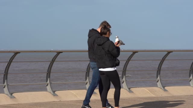 people walk past seagulls and the sea on september 29 2020 in manchester england - water bird stock videos & royalty-free footage