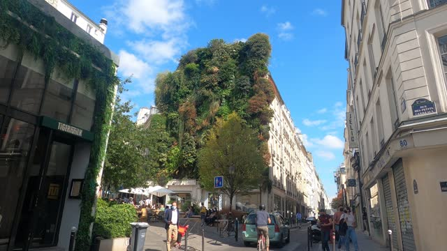 people walk past the plant wall of the oasis of aboukir at the corner of the rue d'aboukir a private achievement designed by the botanist patrick... - botanist stock videos & royalty-free footage