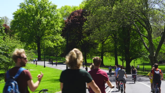 people walk, run and ride bicycle on the park road, which are surrounded by many growing fresh green leaf trees in central park at new york city ny usa on may. 11 2019. - baumbestand stock-videos und b-roll-filmmaterial