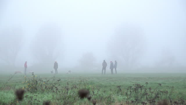 people walk their dogs in the early morning mist on walthamstow marshes on december 07, 2020 in london, england. parts of the south of the country... - morning stock videos & royalty-free footage