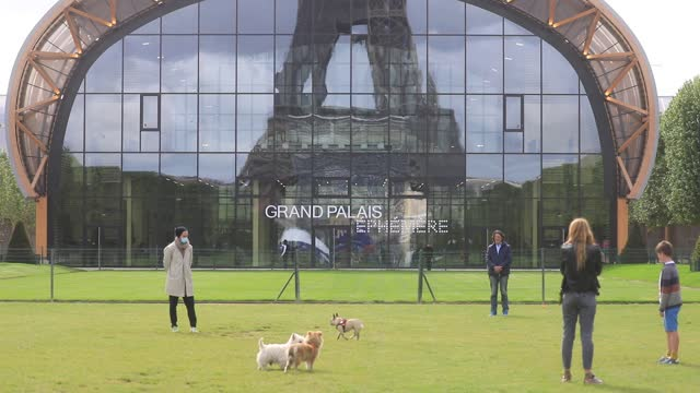 people walk their dogs on the lawns of the champ de mars, in the background the eiffel tower is reflected in the facade of the grand palais ephemere... - grand palais stock videos & royalty-free footage