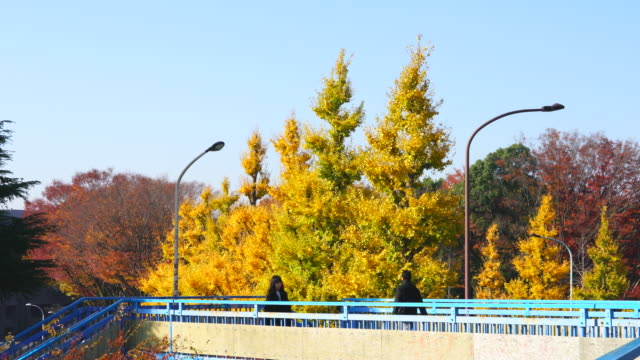 people walk through on the elevated pedestrian bridge, which is surrounded by rows of autumn leaves ginkgo trees at harajuku district  shibuya tokyo japan on november 29 2017. - 歩道点の映像素材/bロール