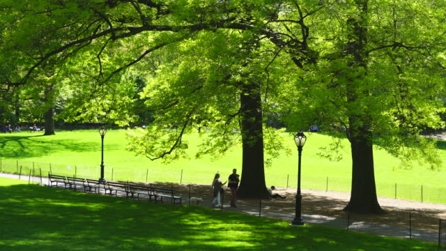 vidéos et rushes de people walk through on the footpath under the big growing fresh green leaf trees among the lawn in central park at new york city ny usa on may. 11 2019. - banc public
