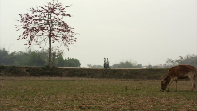 ws, people walking and riding in rickshaw on embankment near field, bangladesh - embankment stock videos & royalty-free footage