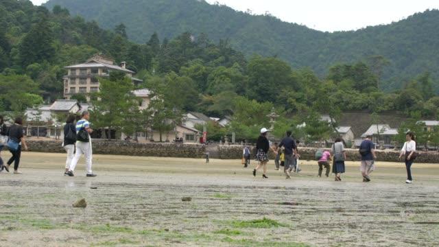 people walking around at low tide, japan - bassa marea video stock e b–roll