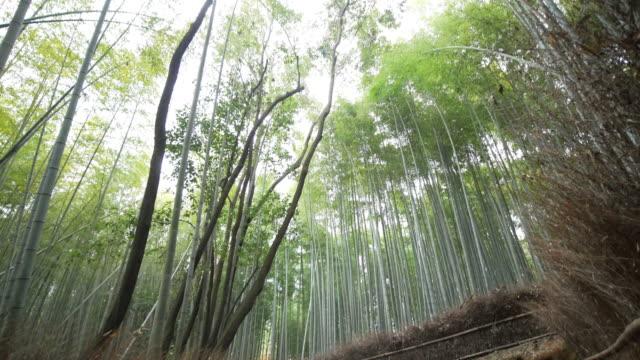 people walking at the bamboo forest at arashiyama in kyoto, japan - satoyama scenery stock videos & royalty-free footage