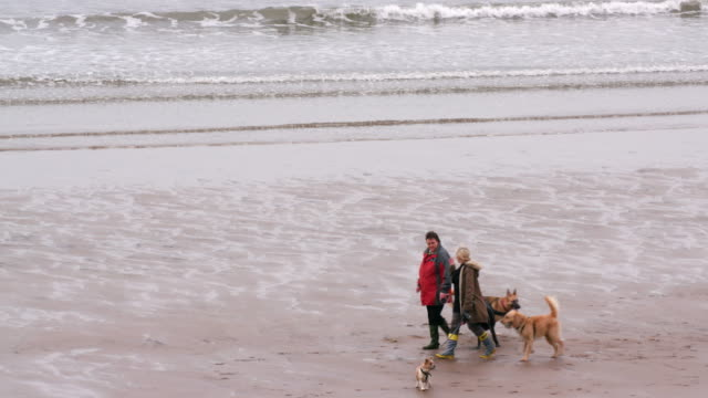 People Walking Dogs On Beach Marine Drive Scarborough North Yorkshire England