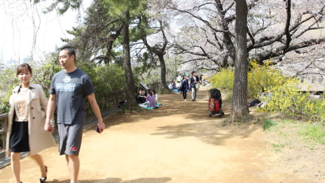 """vídeos de stock, filmes e b-roll de people walking down a path way in the famous cherry blossom trees viewing spot """"chidorigafuchi"""" located in between the imperial palace and british... - máscara cirúrgica"""
