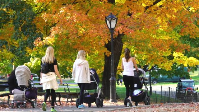 vídeos y material grabado en eventos de stock de tu people walking down the path under the autumnal color trees at central park. - cochecito de bebé