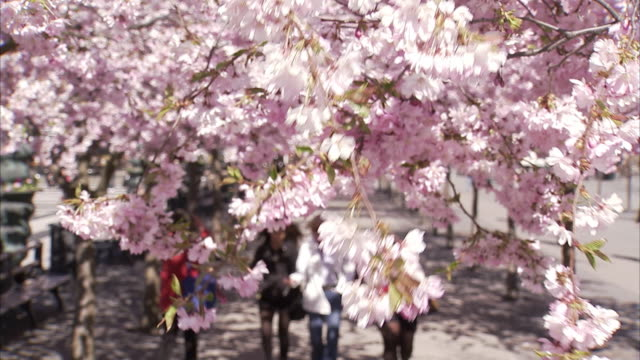 people walking in a flowery park kungstradgarden stockholm sweden. - springtime stock videos & royalty-free footage