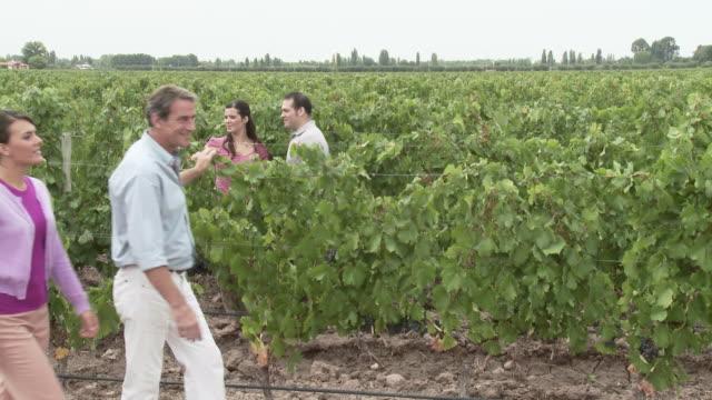 People walking in a vineyard, looking at plants