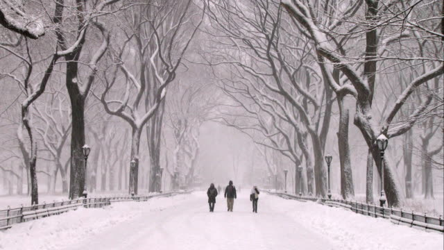 People Walking in Central Park During a Snowstorm