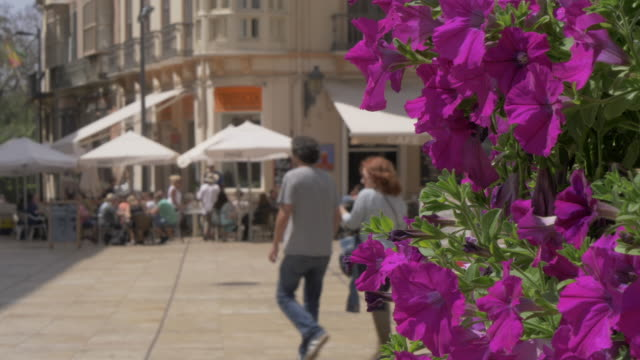 people walking in old town, malaga, andalucia, spain, europe - pavement cafe stock videos and b-roll footage
