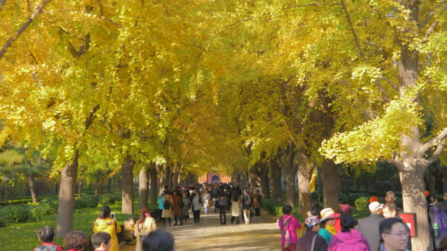 ws people walking in park near yonghe temple, beijing, china - lamasery stock videos and b-roll footage
