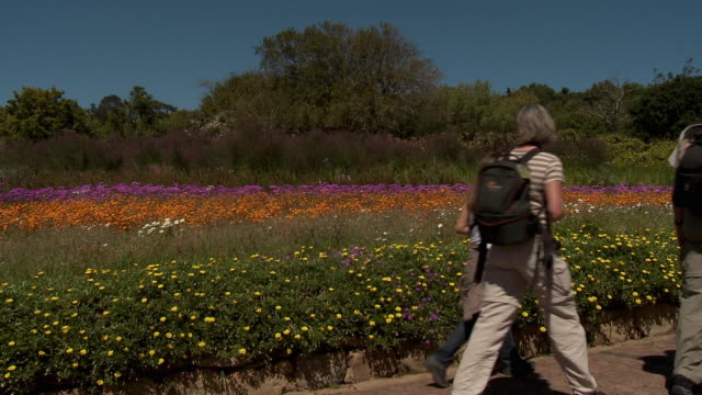 ms people walking on path along colorful flowerbed, kirstenbosch national botanical garden, cape town, western cape province, south africa - garden path stock videos and b-roll footage