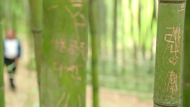 people walking on promenade in bamboo grove - damyang stock videos & royalty-free footage