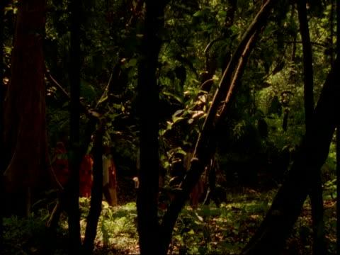wa people walking through jungle, bandhavgarh national park, india - national icon stock videos & royalty-free footage