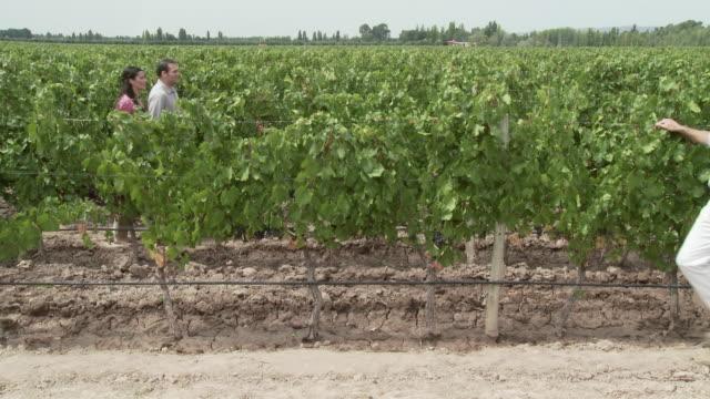 People walking through vineyard, looking at plants