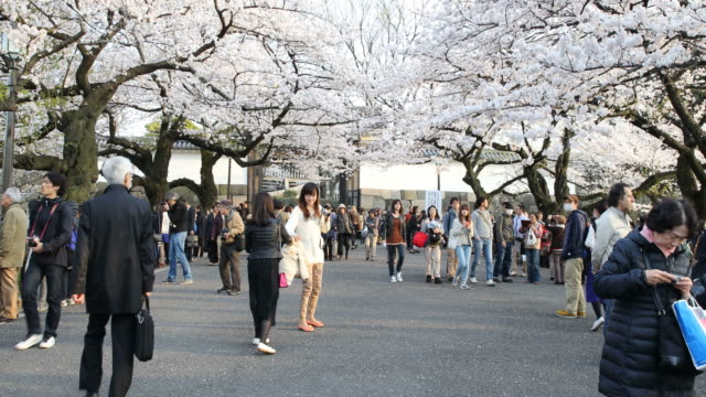 People walking under beautiful blossoming cherry trees in Tokyo, Japan